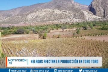 HELADAS AFECTAN LA PRODUCCIÓN EN TORO TORO