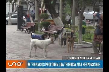 DESCUBRIENDO LA VERDAD: PROLIFERACIÓN DE PERROS CALLEJEROS