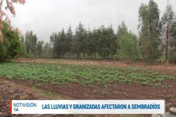 LAS LLUVIAS Y GRANIZADAS AFECTARON A SEMBRADÍOS