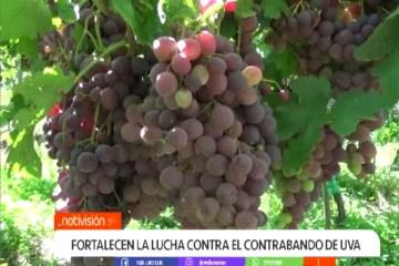 FORTALECEN LA LUCHA CONTRA EL CONTRABANDO DE UVA