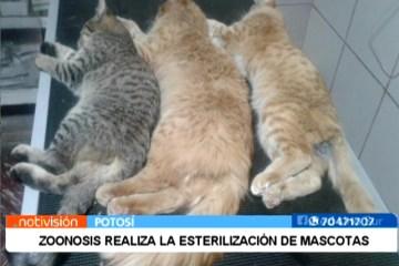 ZOONOSIS REALIZA LA ESTERILIZACIÓN DE MASCOTAS