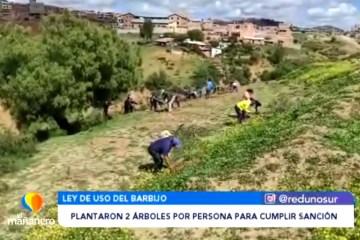 PLANTARON ÁRBOLES PARA CUMPLIR CON LA SANCIÓN POR NO USAR BARBIJO