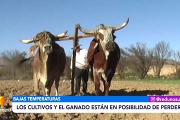 LOS CULTIVOS Y EL GANADO ESTÁN EN POSIBILIDADES DE PERDERSE