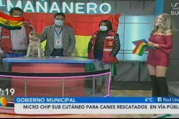 ALCALDÍA INICIA PROCESO DE REGISTRO INFORMÁTICO PARA CANES CON MICRO CHIP