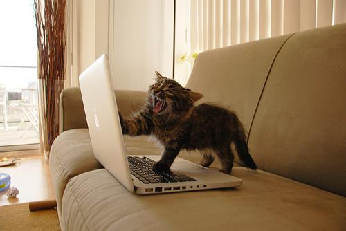 La red neuronal armada por Google reconoció por sí sola imágenes de gatos en internet.