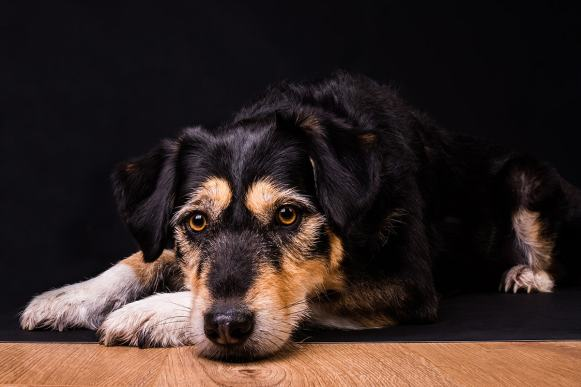 Ipswich pet photographer