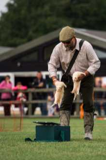 Feretting at the Falconry & Countryside Show, Stonham Barns, Suffolk
