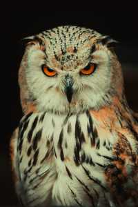 Stonham Barns, Suffolk Owl Sancuary