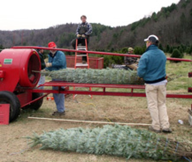 Baling A Christmas Tree