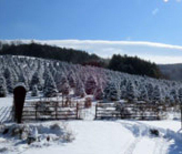 Snowy Tree Field