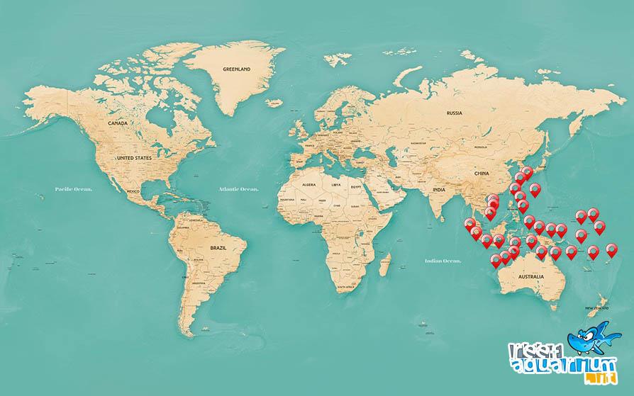 Areale biogeografico Chrysiptera Cyanea