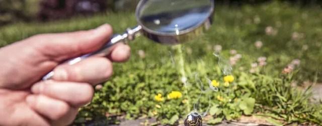 Magnifying Glass Shining