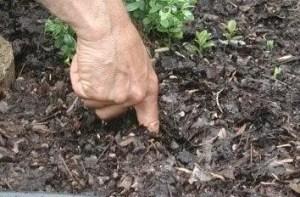Plant soil finger test