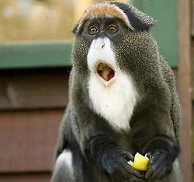 This monkey cannot believe all the animals below are real