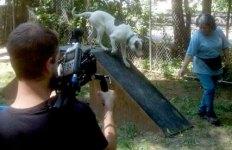 Travis Edwards shoots Dog by Dog