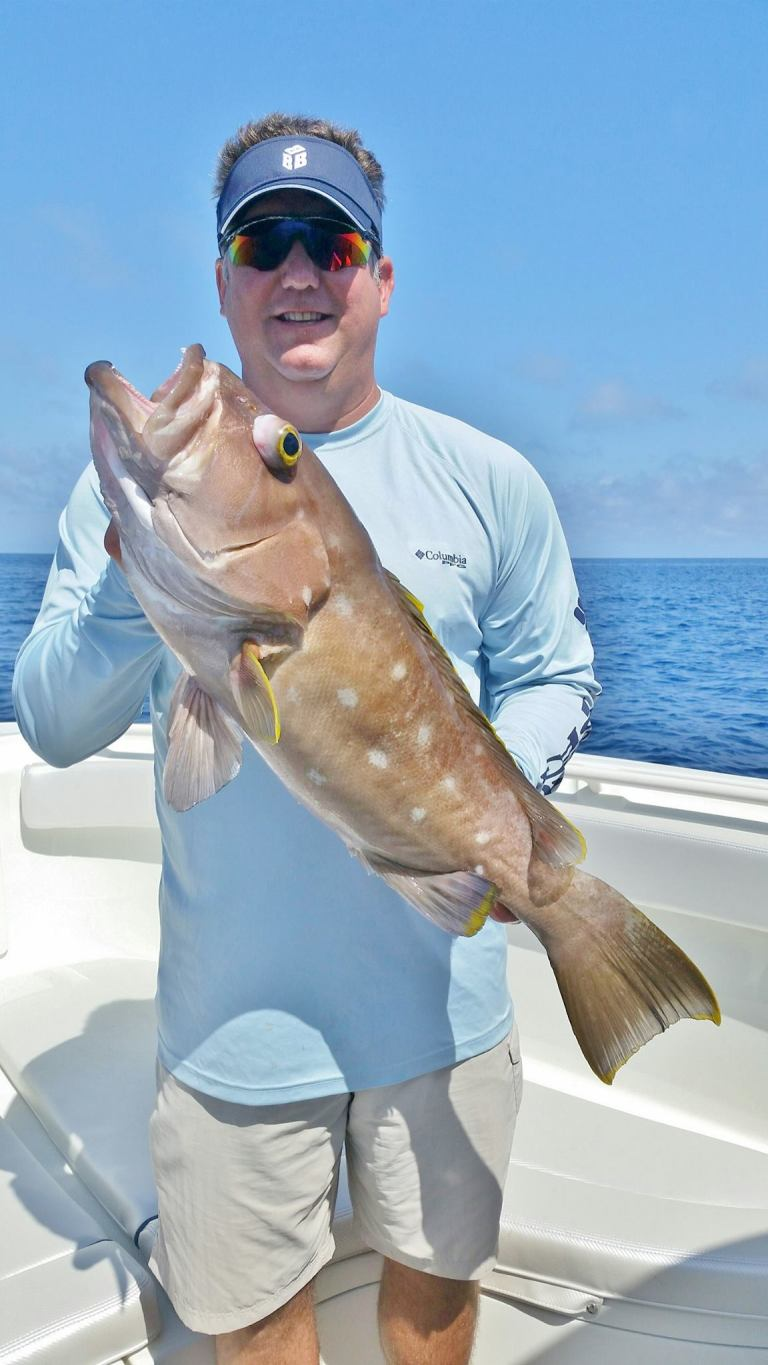 Nice Yellow Edge Grouper