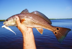 how to catch redfish 3
