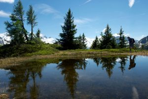 Altitude lake and pine trees with a Mont Blanc view