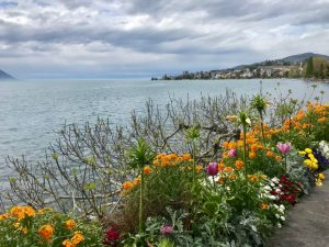 flowers by the water lake leman