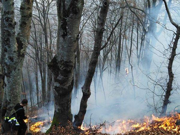 Cetăţeni, nu uitaţi !       Prevenind incendiile, protejaţi viaţa, mediul şi bunurile