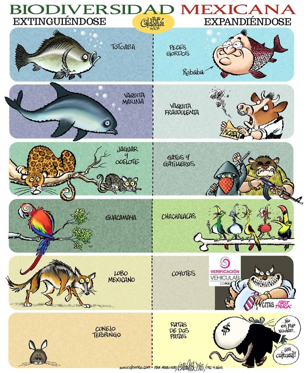Biodiversidad Mexicana - Calderón