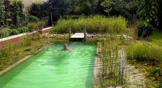 Biopiscina piscina natural o piscina naturalizada que es for Biopiscinas construccion