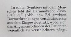 Sauerkraut fördert bekanntlich die Darmflora – neudeutsch: das Mikrobiom.