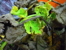 Pflanzen - warten sie nicht wie wir alle auf Transformation?