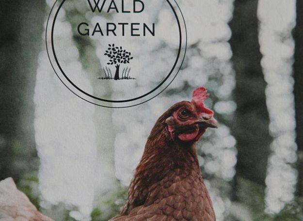 Dürfen sich im Wald vor Raubvögeln verstecken - Legehennen vom Waldgartenhof