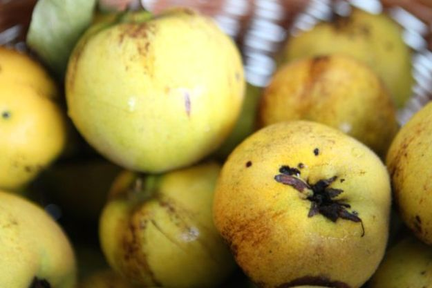Nach Äpfeln die besten Pektin-Lieferanten