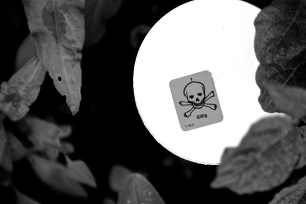 Kauft Bayer Monsanto? Beschleunigt sich das Artensterben dann noch mehr als bisher?