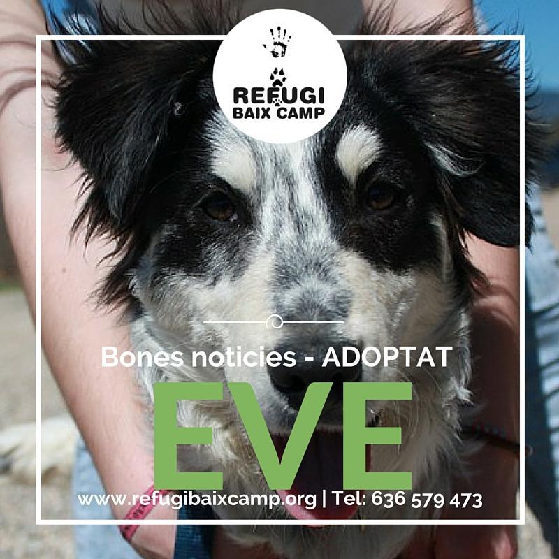 Eve Adoptat