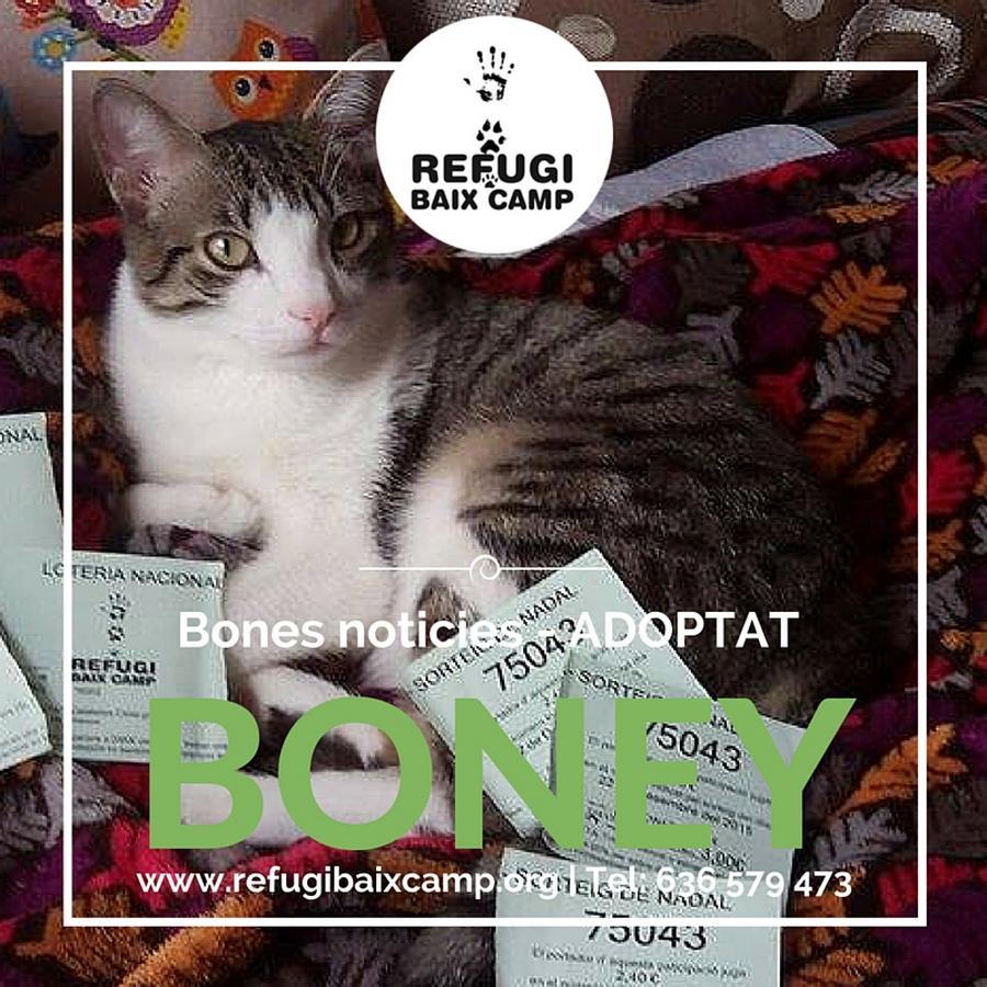 Boney Adoptat