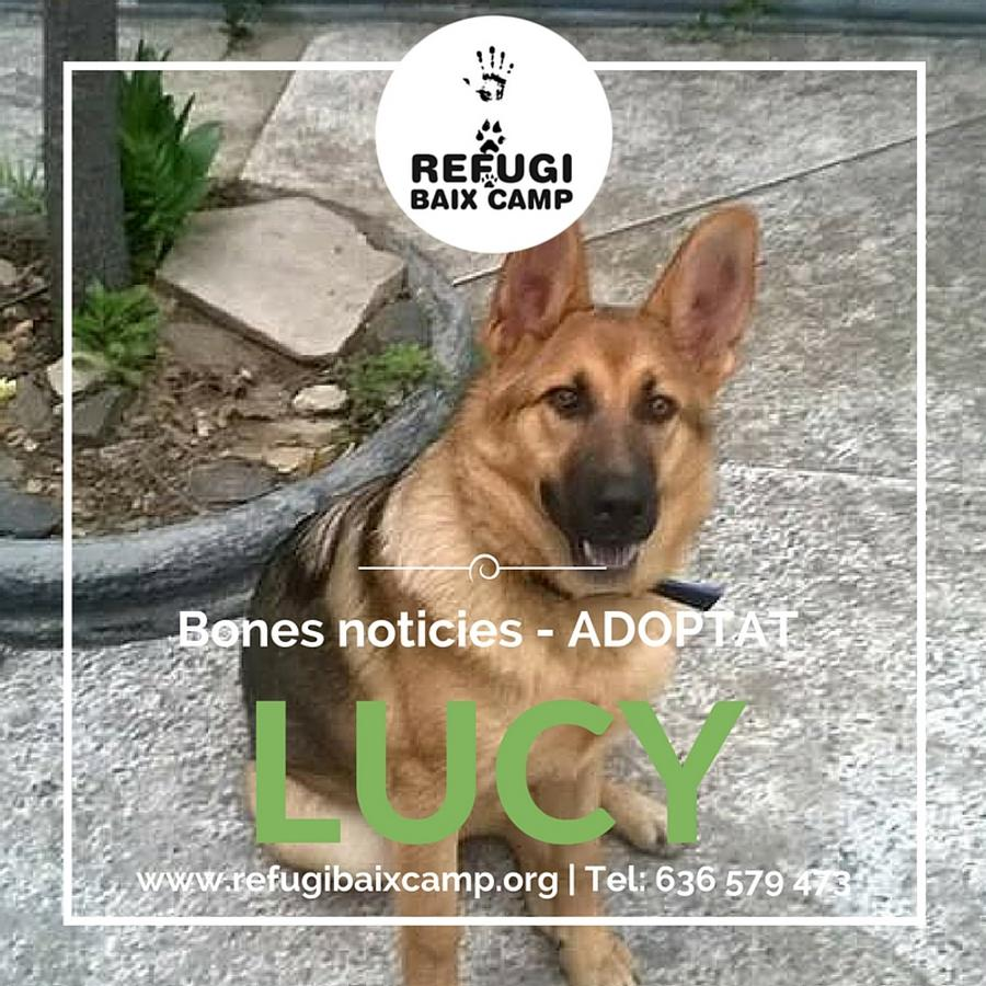 Lucy Adoptat