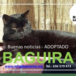 BAGUIRA ADOPTADO