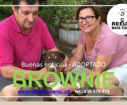 BROWNIE ADOPTADA