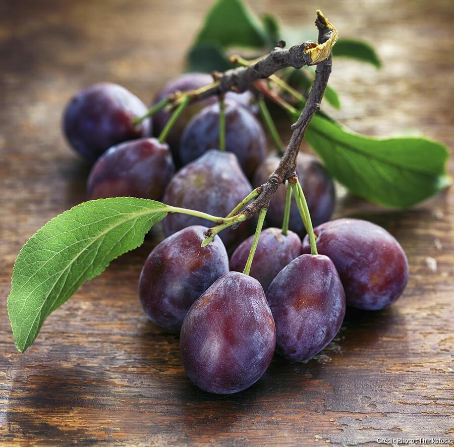 Prunes : conseils d'achat et recettes - Régal