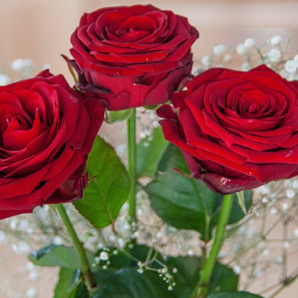 3 beautiful stems of red roses with gypso.