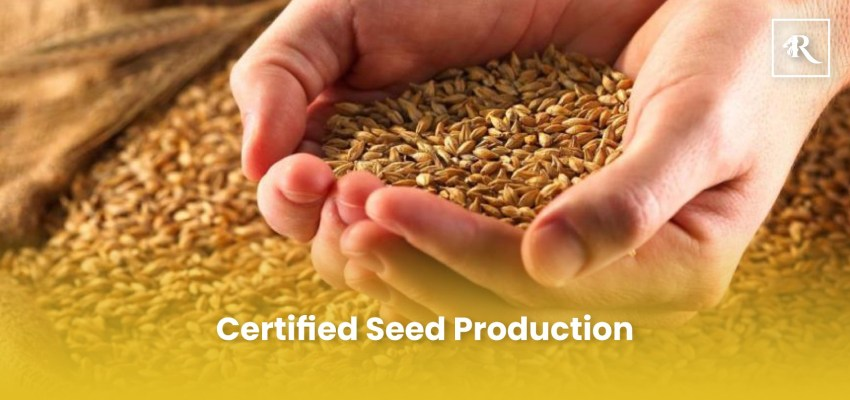 Certified Seed Production business ideas in pakistan
