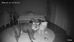 Furgo Dog Camera modo visión nocturna