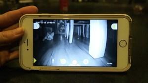 Furgo Dog Camera Vista desde el celular la modo visión nocturna