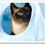 Reciclar camisetas: cómo hacer una casita para gatos DIY