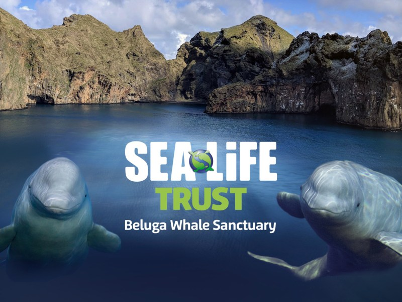 the Sea Life Trust Olympus sponsorship