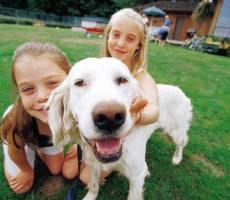 Hondenoppas, hondenuitlaat