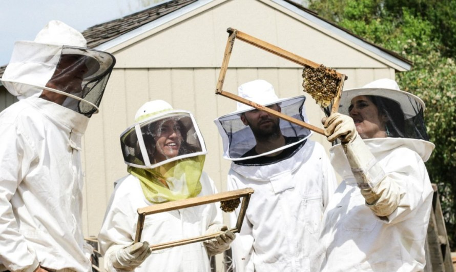 10 Best Beekeeping Apps for Android and iOS