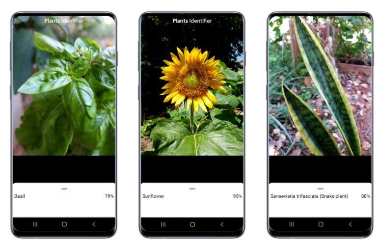 Plants Identifier