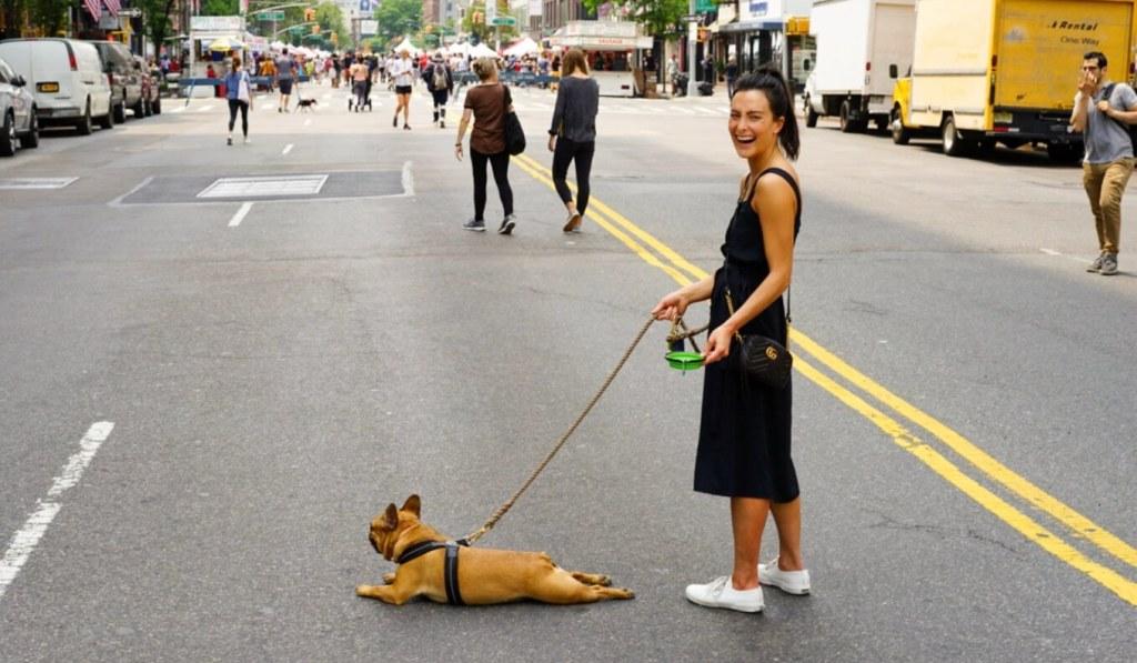 Best Dog Walking Apps