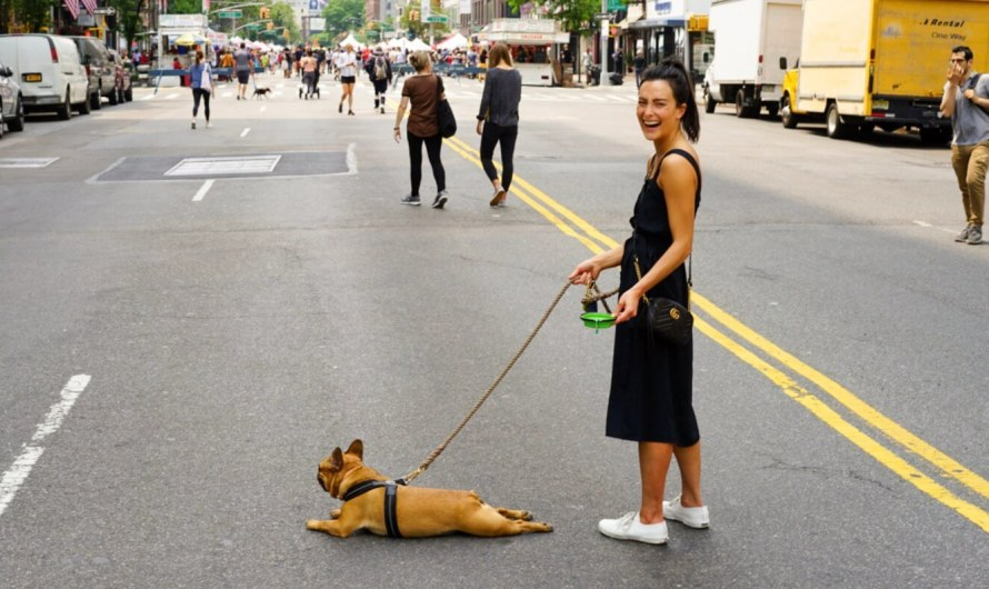 13 Best Dog Walking Apps for Android and iOS