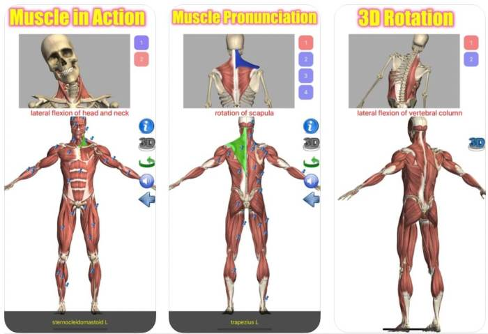Visual Anatomy Lite