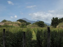 Vinyard just outside Pompei Scavi
